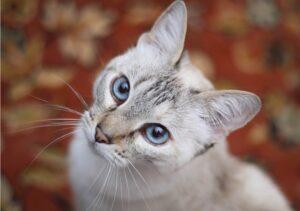 roma gatto malinteso portato via