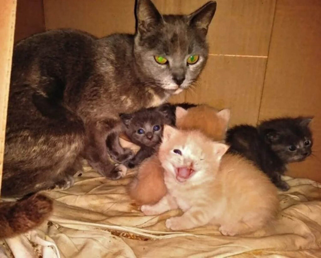 mamma gatta con gattini