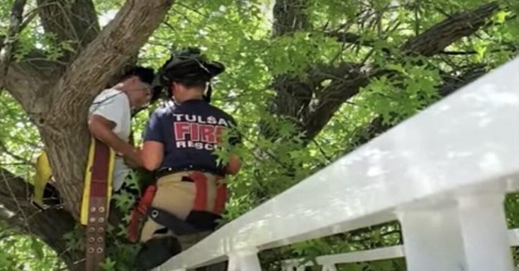 pompieri salvano gatto e padrone bloccati su una pianta