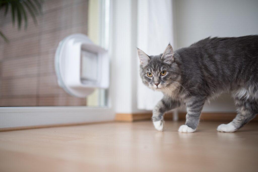 gatto che ha dolore alla zampa