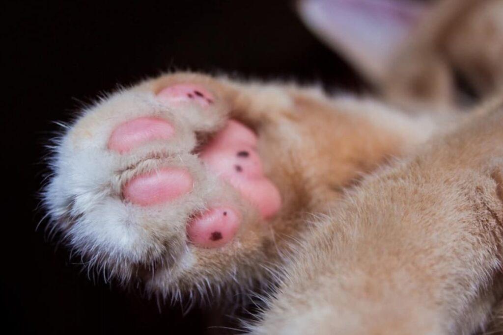 cuscinetti del gatto