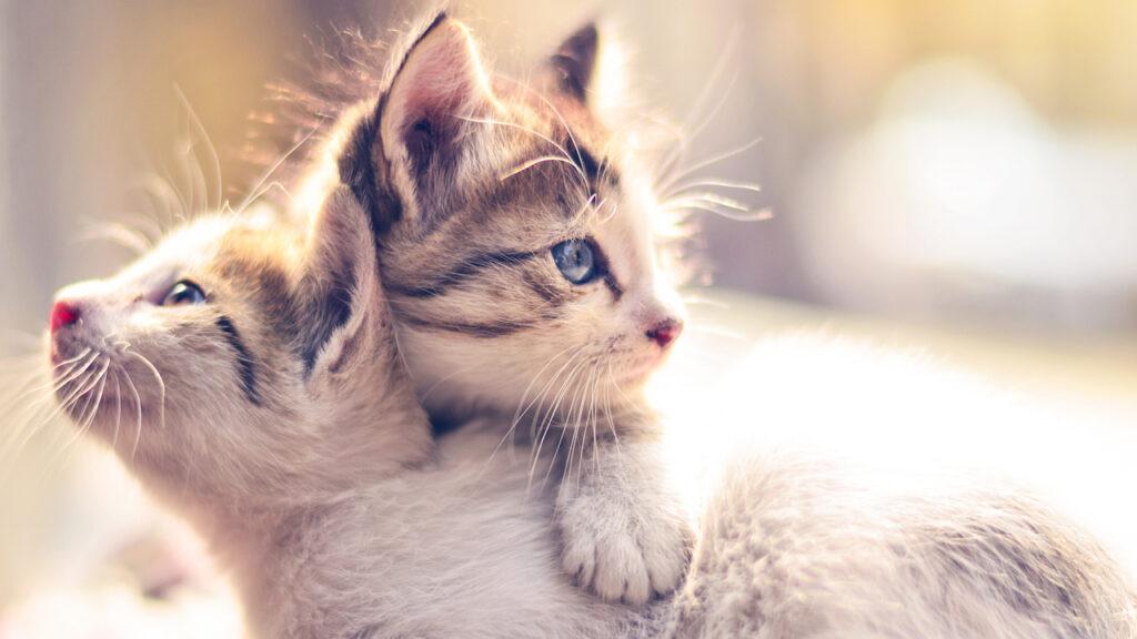 cuccioli di gatto abbracciati