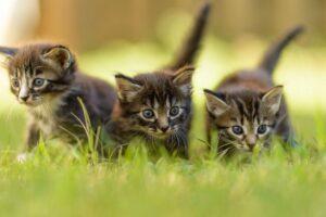 tre gattini nel verde