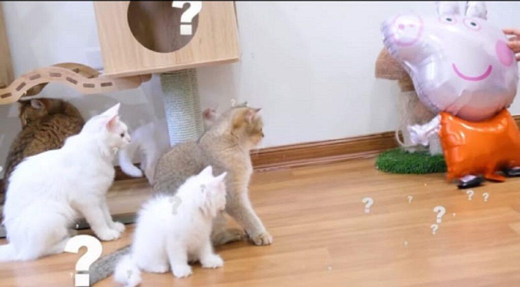 gattini e peppa pig