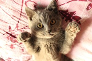 gattino a pancia in su