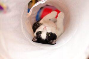 gatto a pancia in su