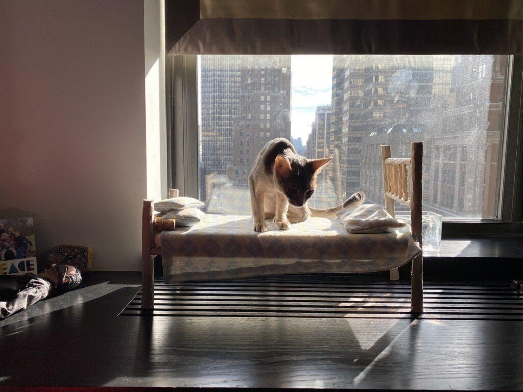felino sul letto