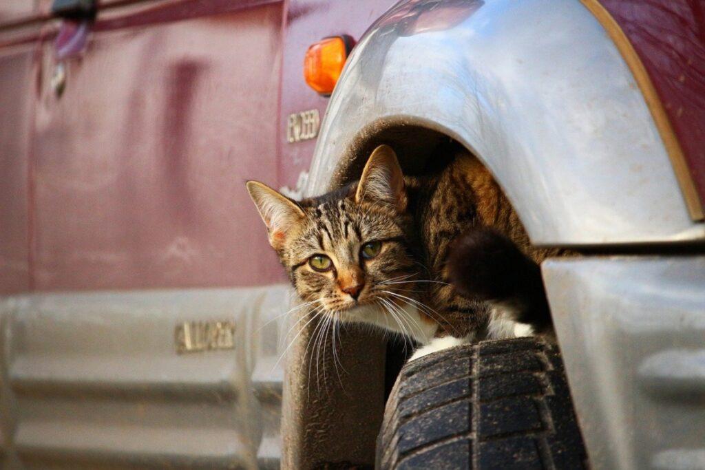 gatto sopra ruota