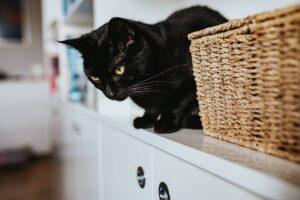 gatto nero cesta