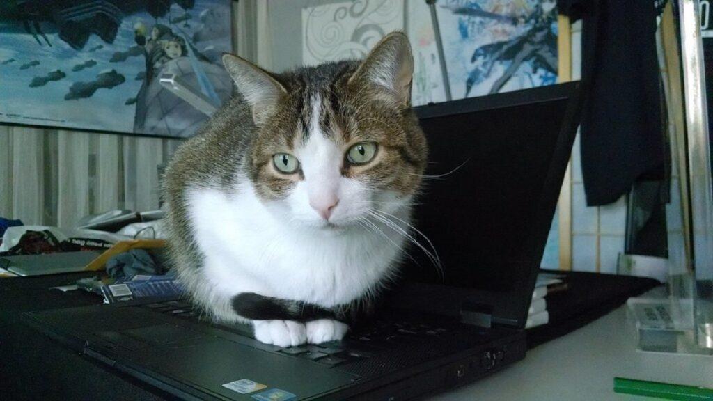 micio pc portatile