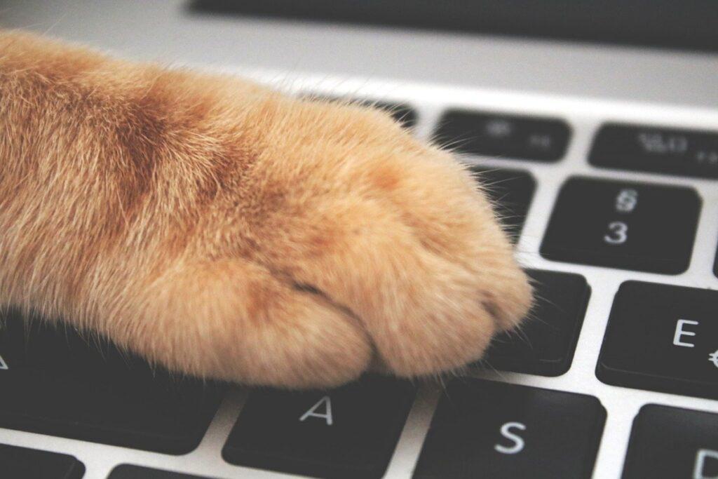 zampa arancione gatto