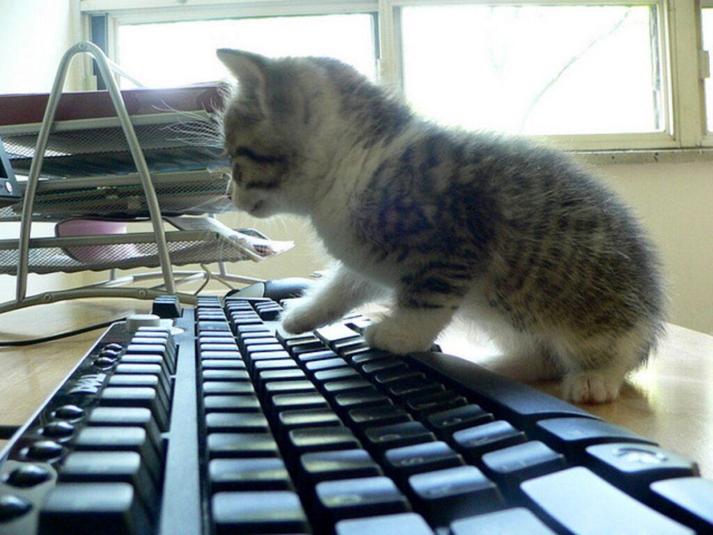 gattino vuole curiosare