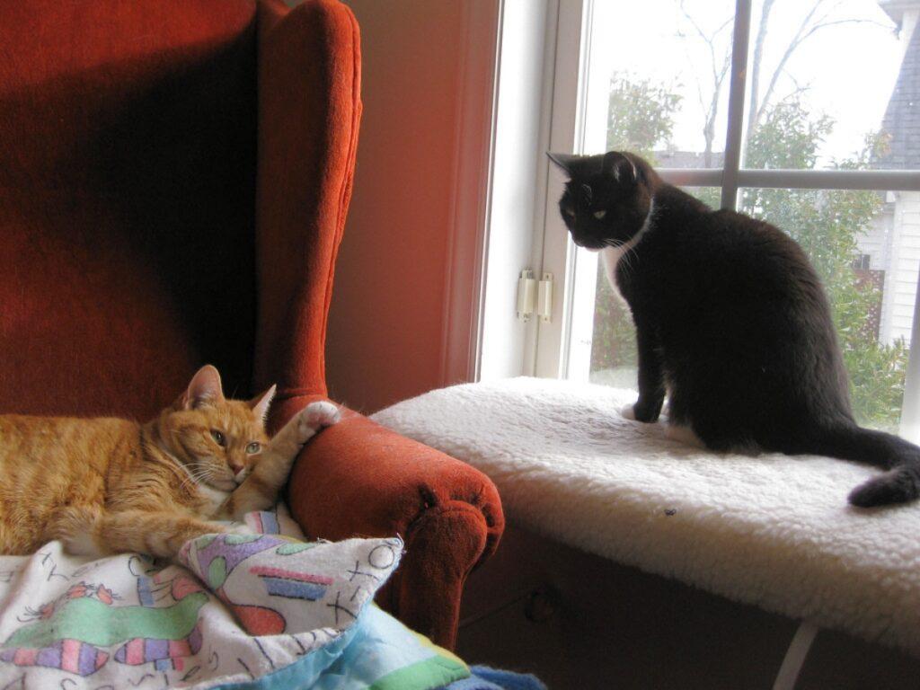 teneri gatti finestra