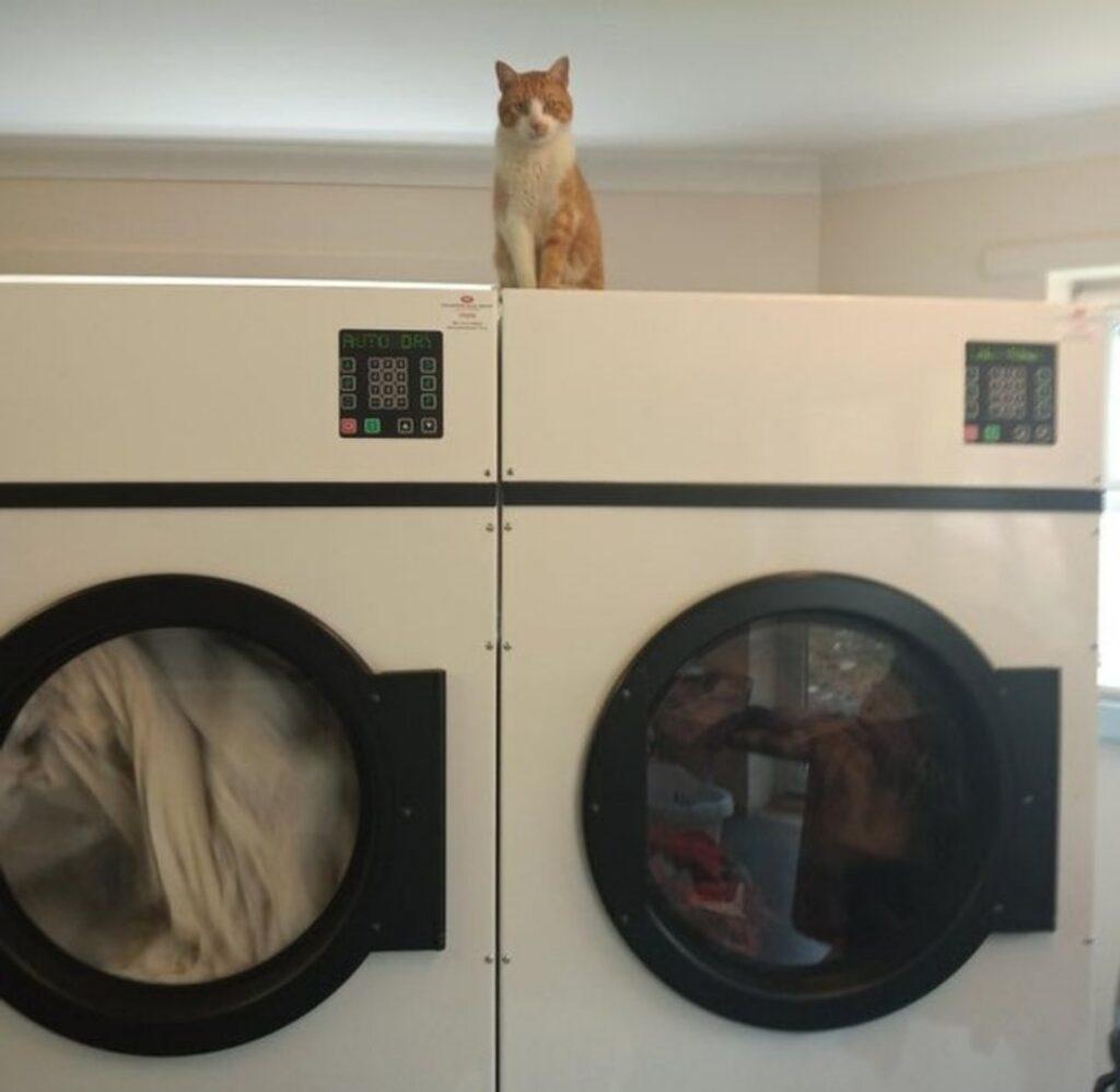 micio lavatrici seduto