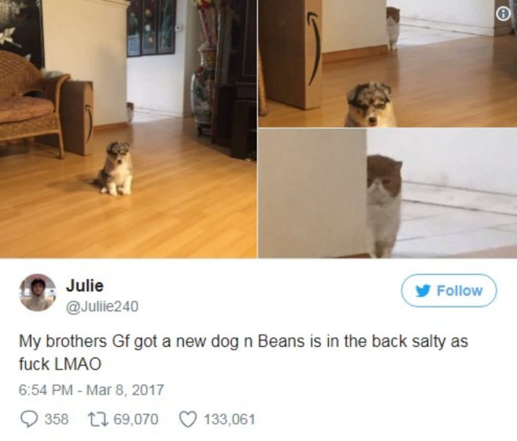 felino scruta cane
