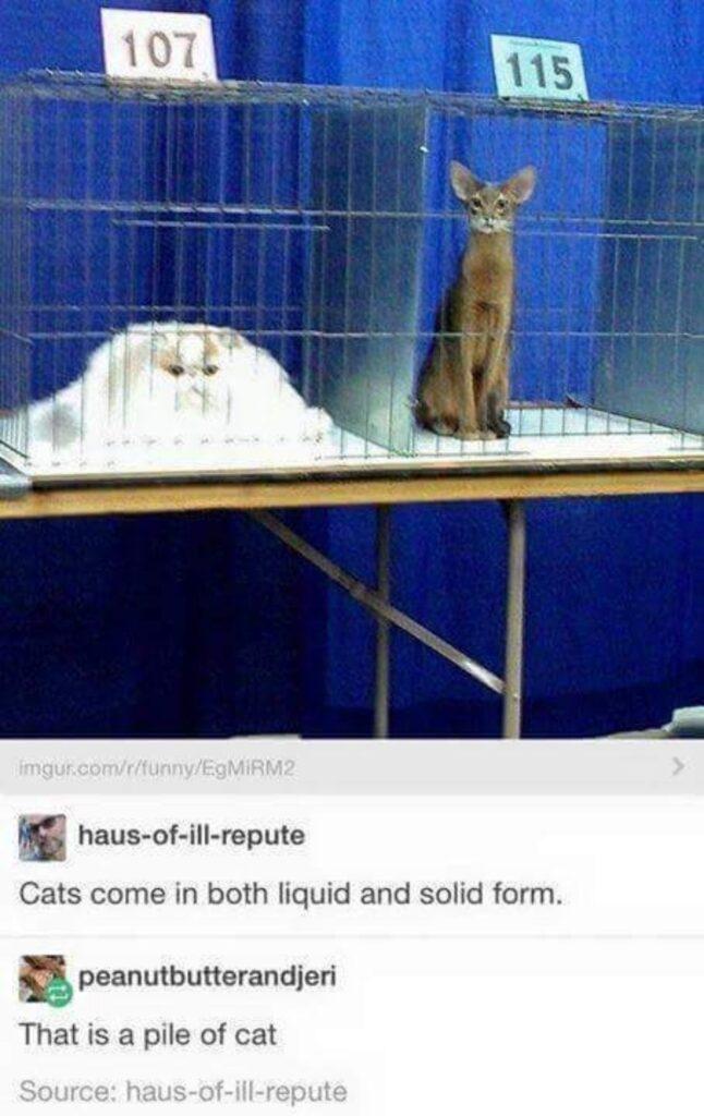 felino acqua solido