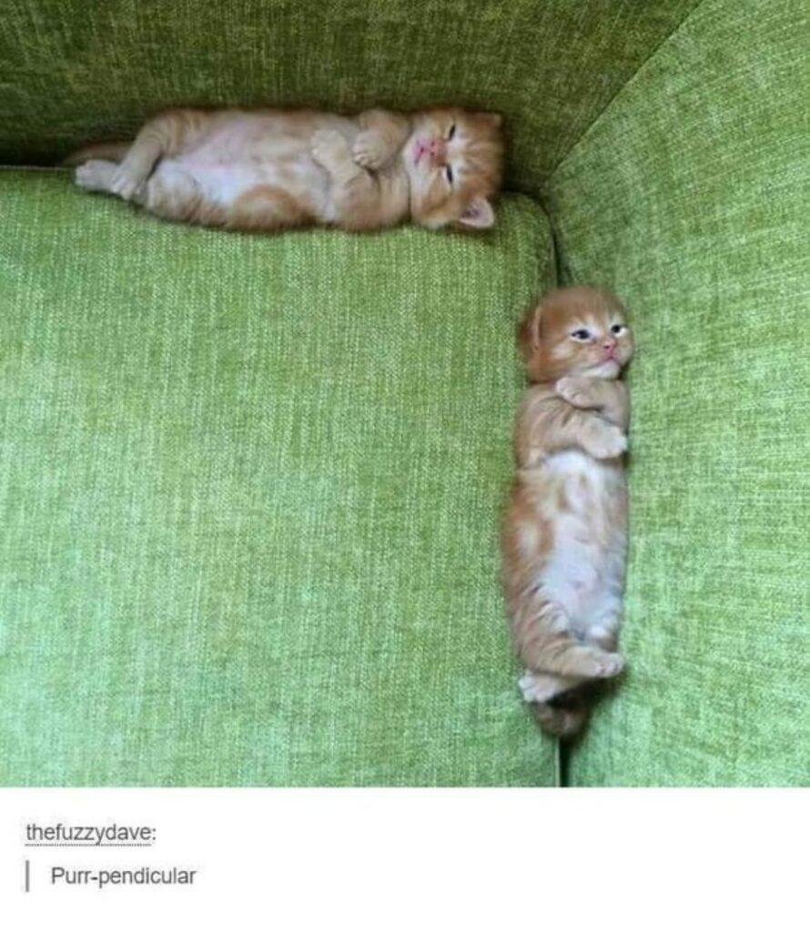 gatti coppia dormire