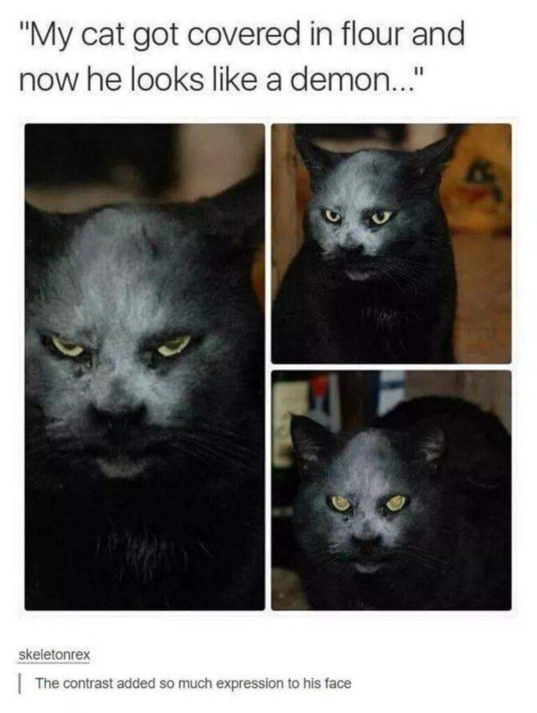 felino viso umano