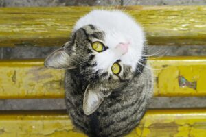 gatto occhi stupendi
