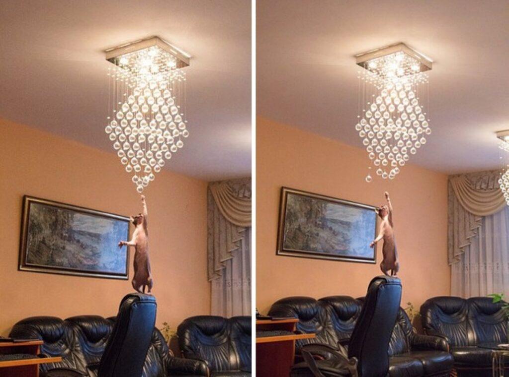 gatto lampadario vetro