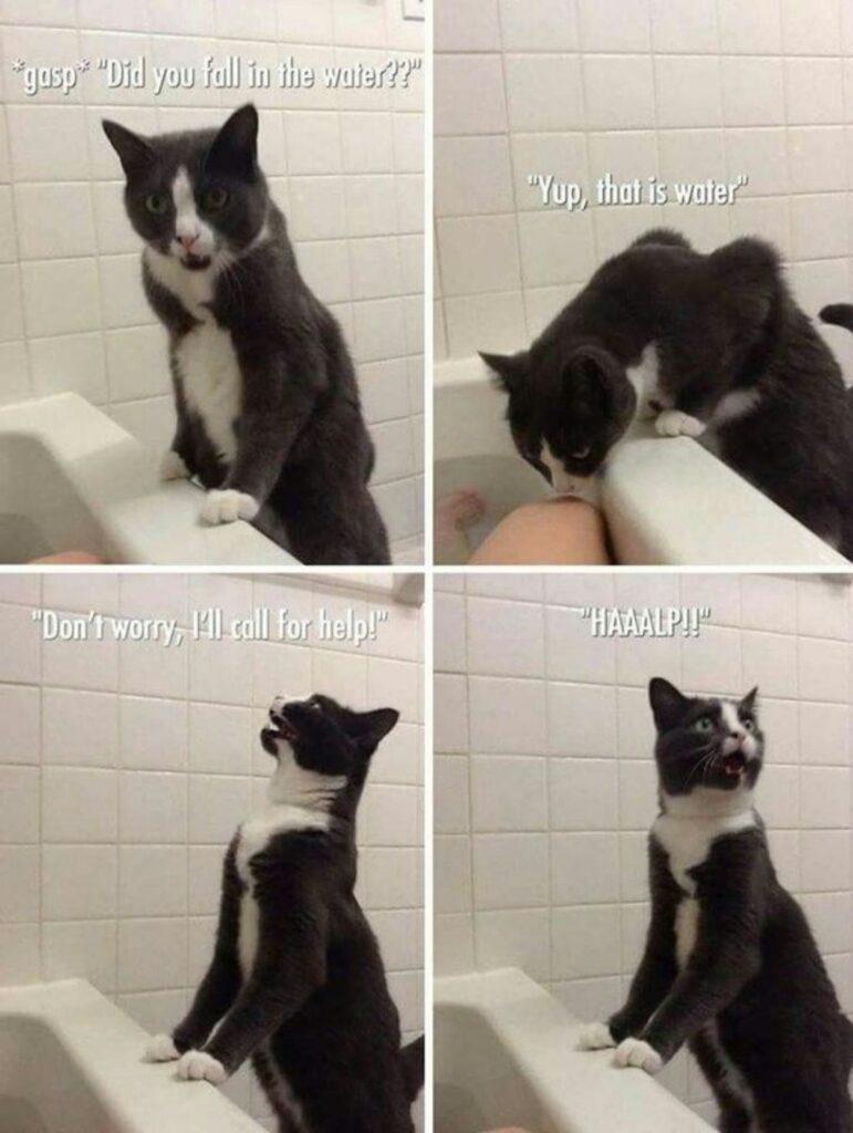 gatto divertente paura
