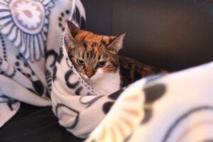 micio coperta caldo