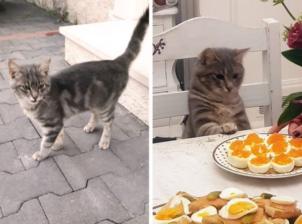 micio piatto fame