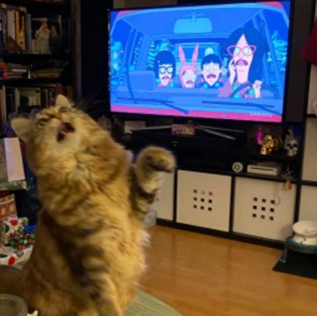 gatto tv divertente