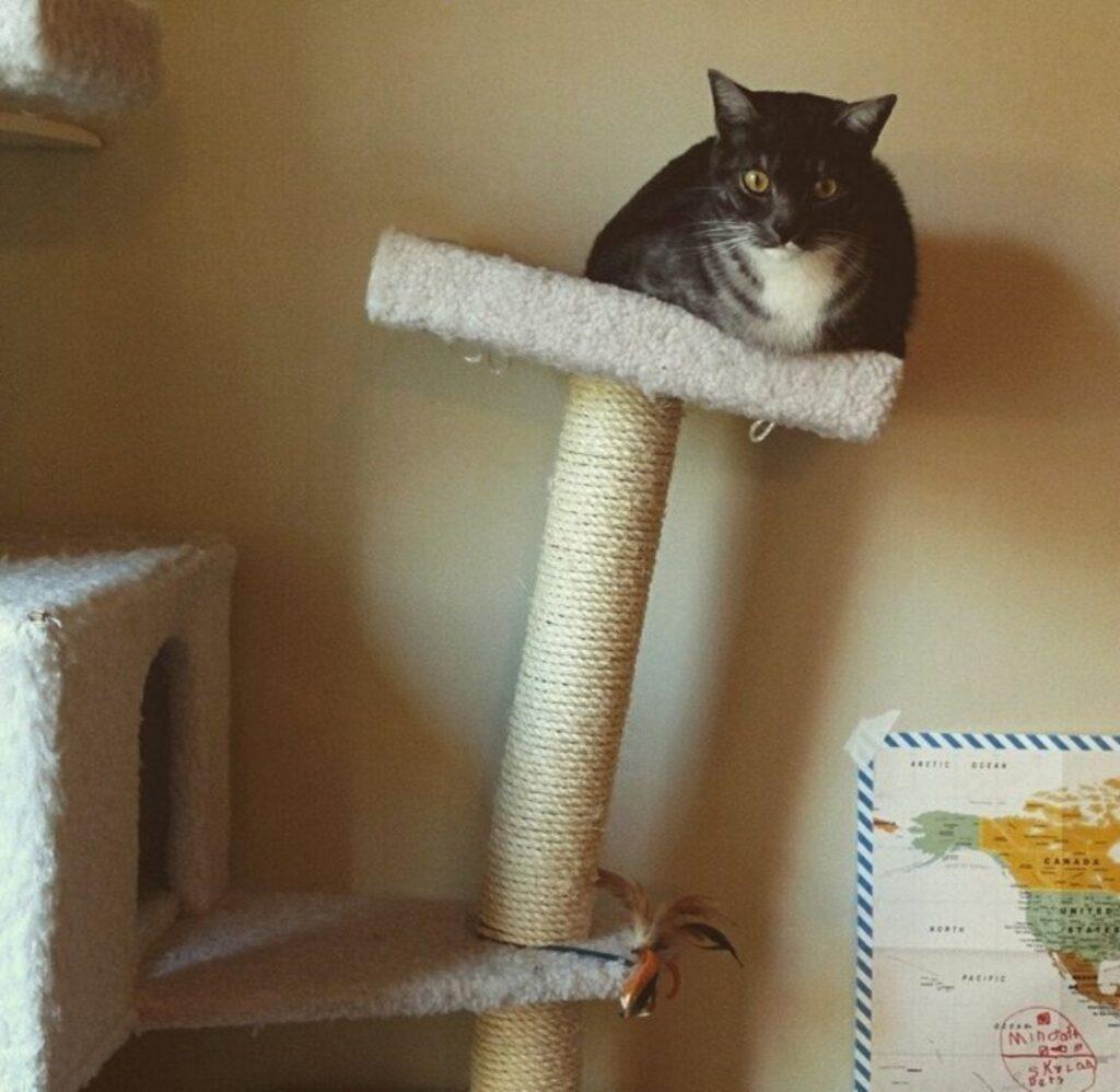 gatto seduto torre