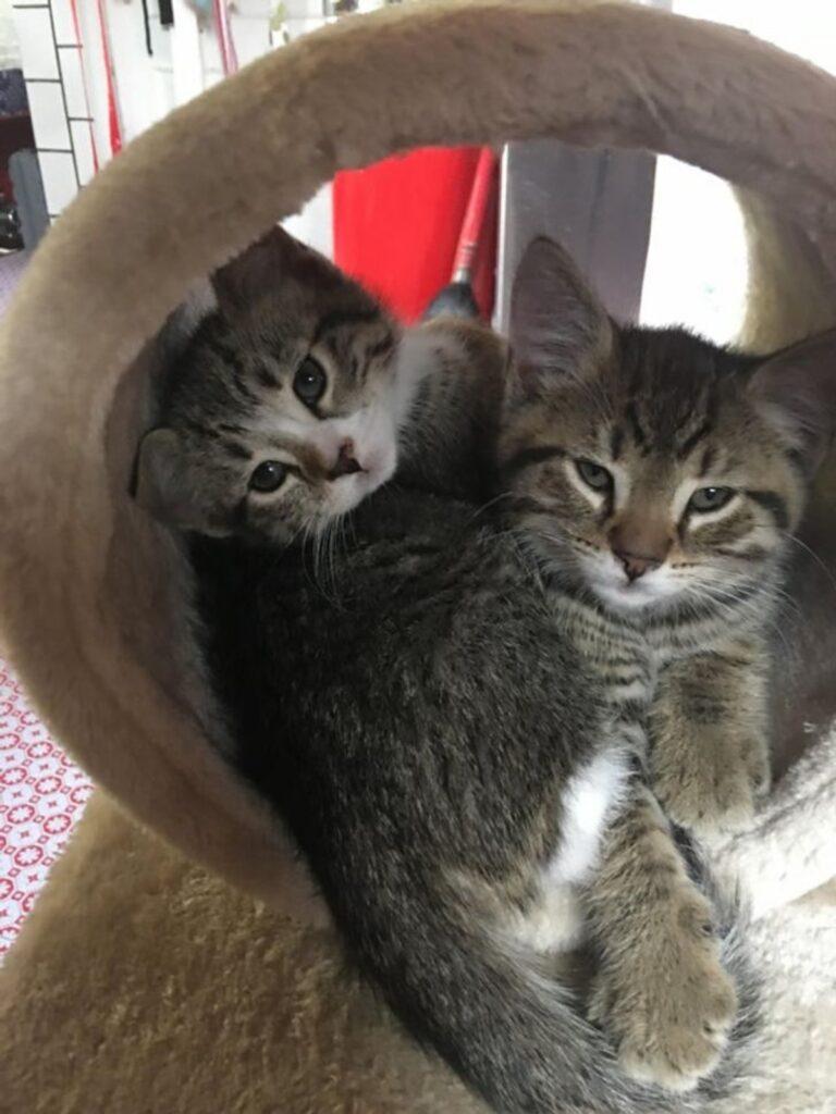 coppia felini sonno