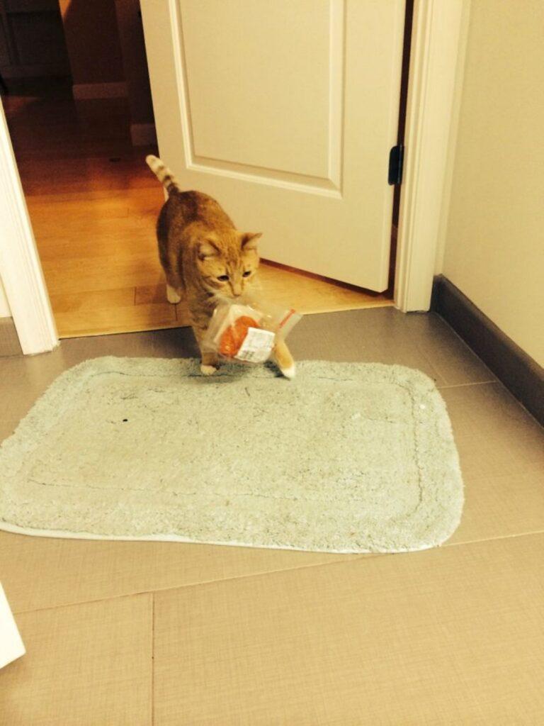 gattino sacchetto bocca