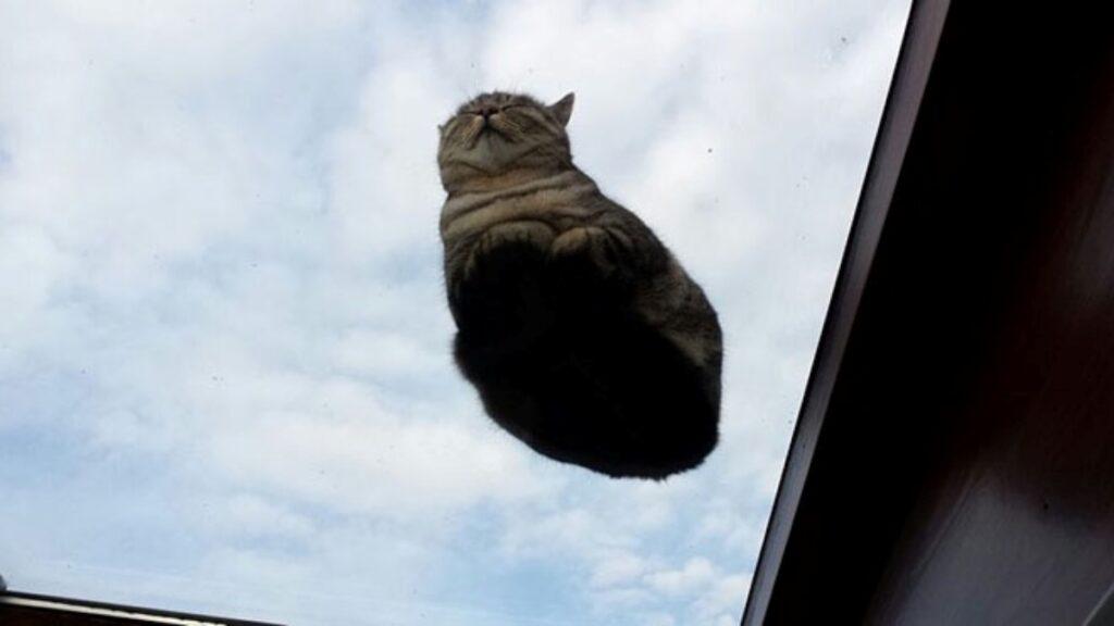 gatto vola aria