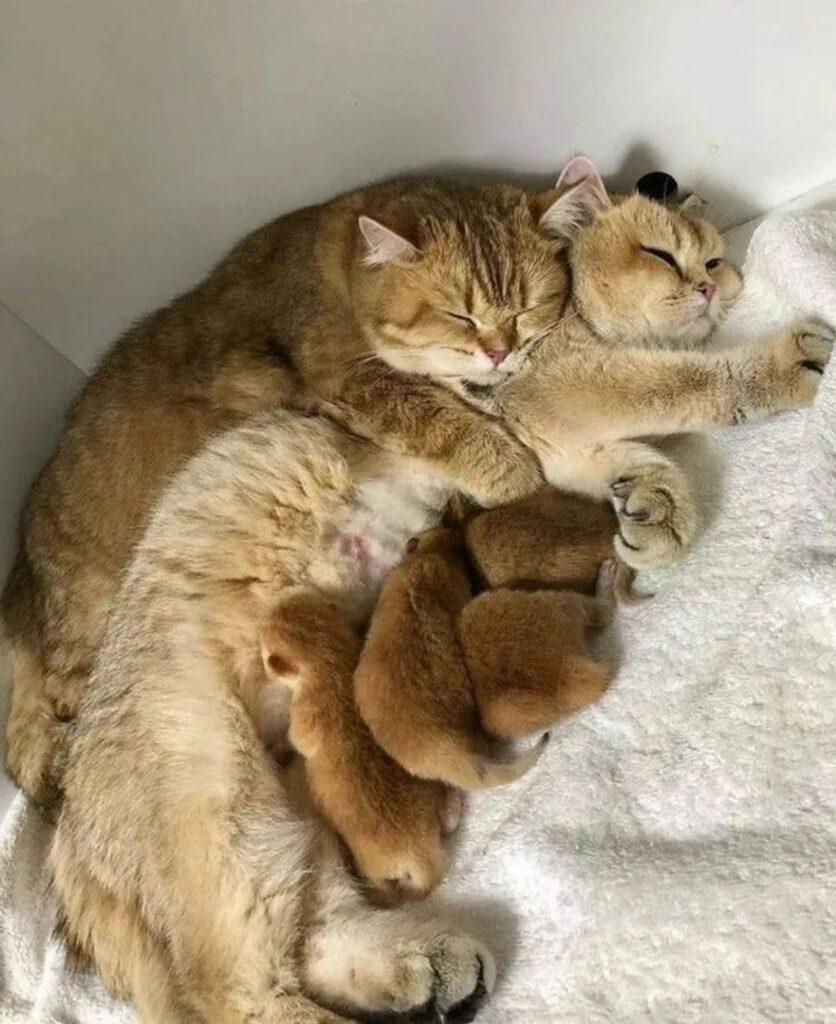 famiglia completa gatto