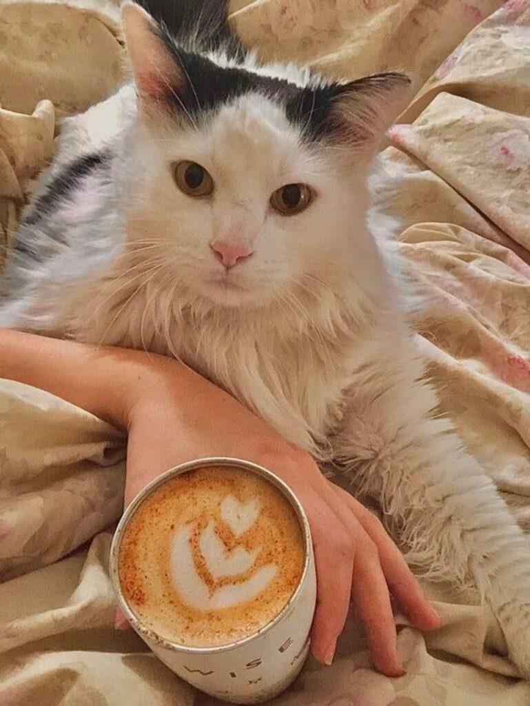 gatto cappuccino colazione