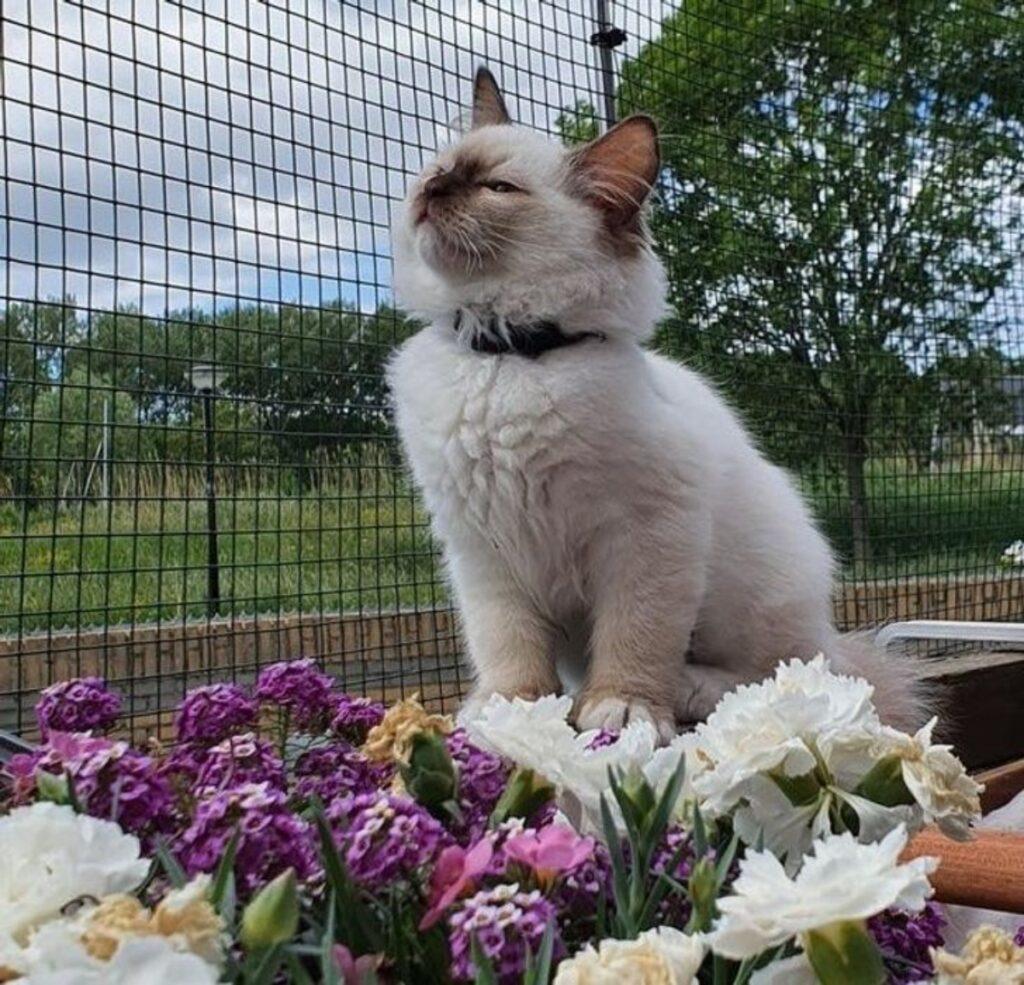 gatto bianco fiori
