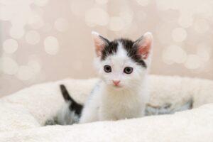 gattino sfondo rosa
