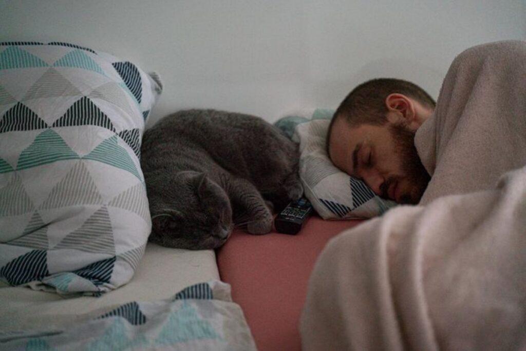 papà micio dormono