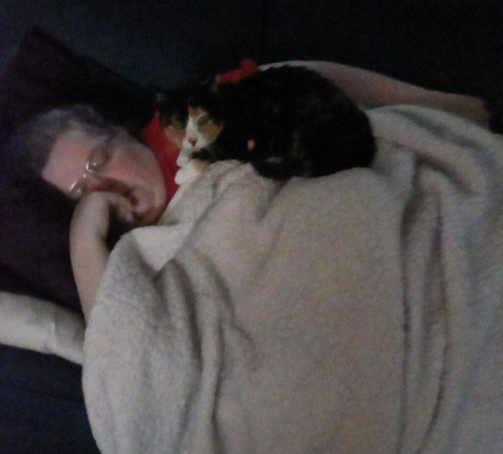 gatto sorveglia mamma