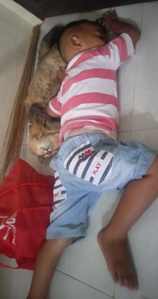 felino dorme bimbo