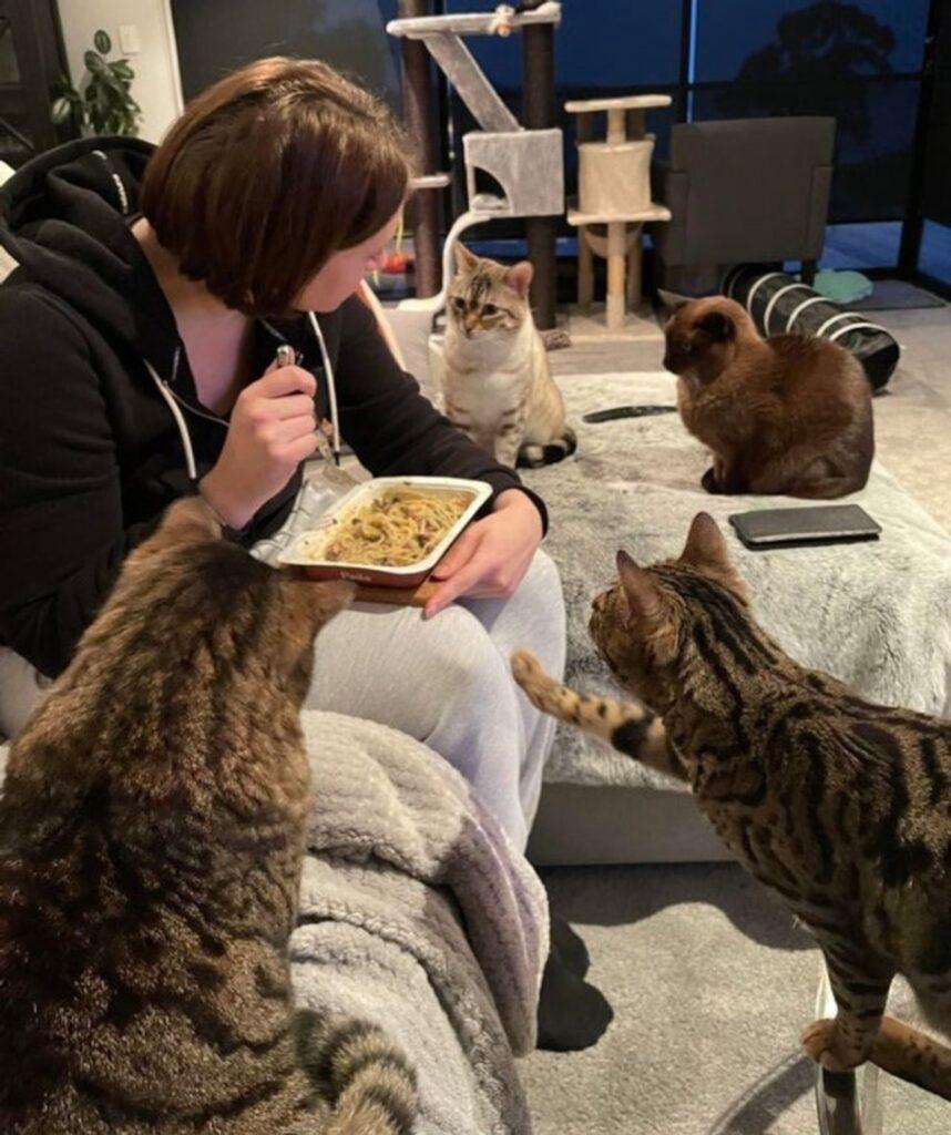 mici guardano piatto