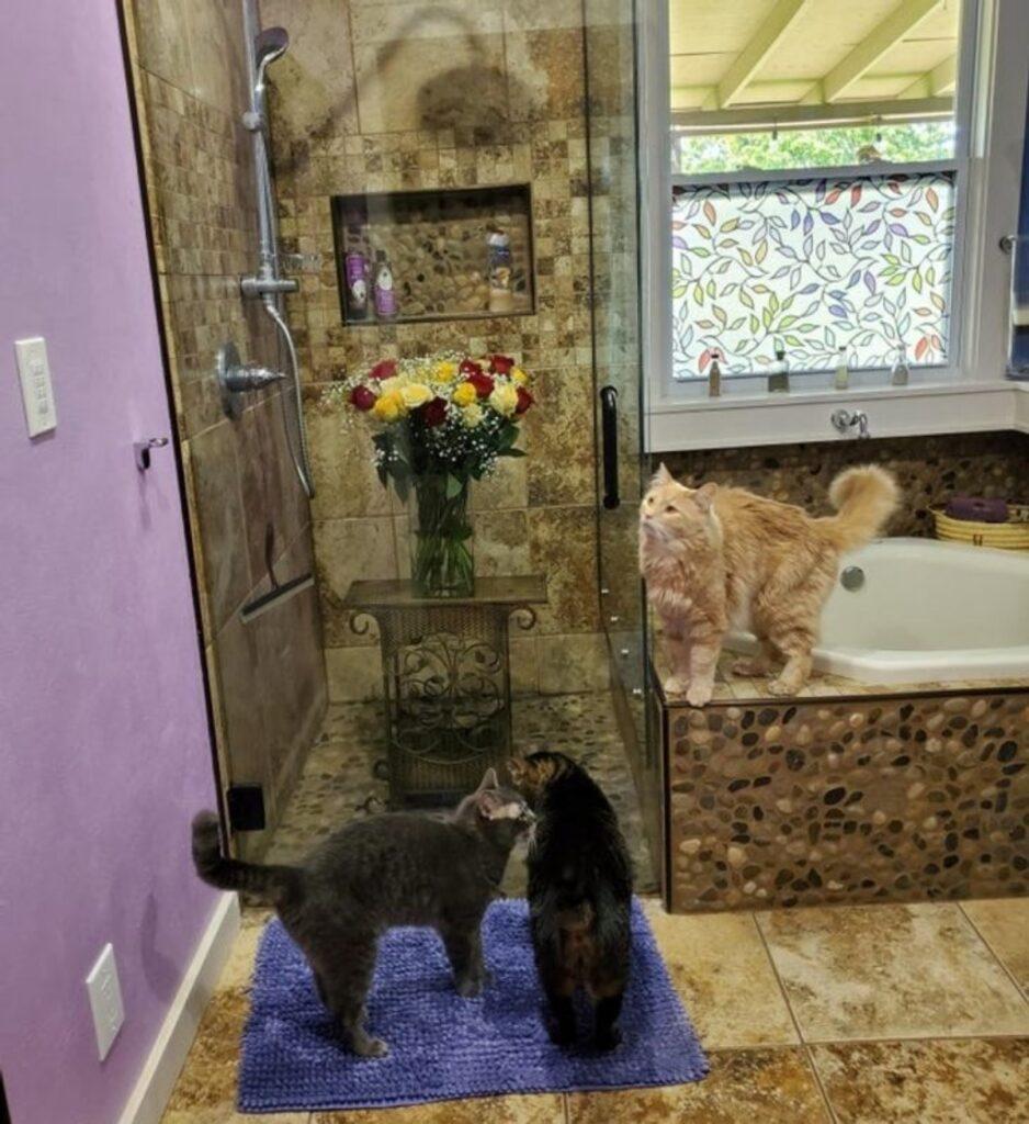 mici guardano doccia