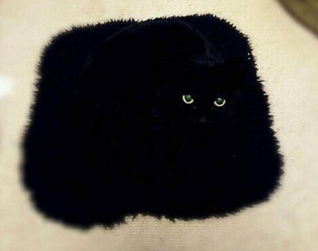 gatto come tappeto nero