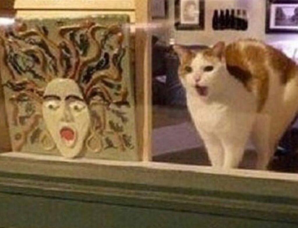 gatto bianco faccia sconcertata