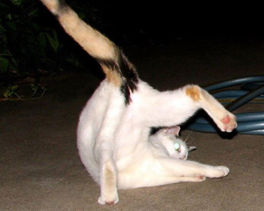 gattino coda alzata in alto