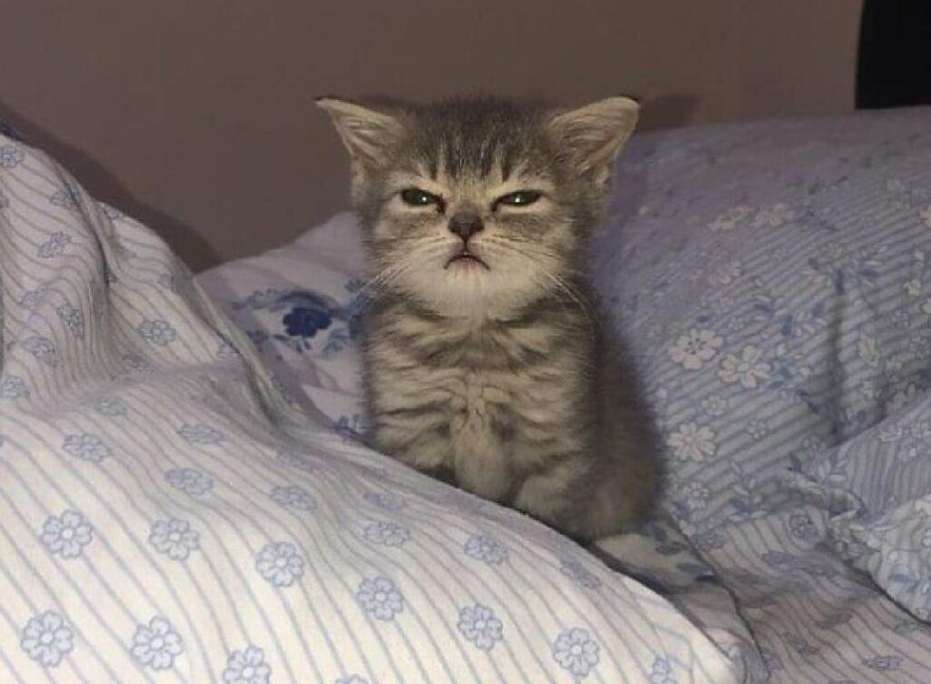 gatto piccolino su letto
