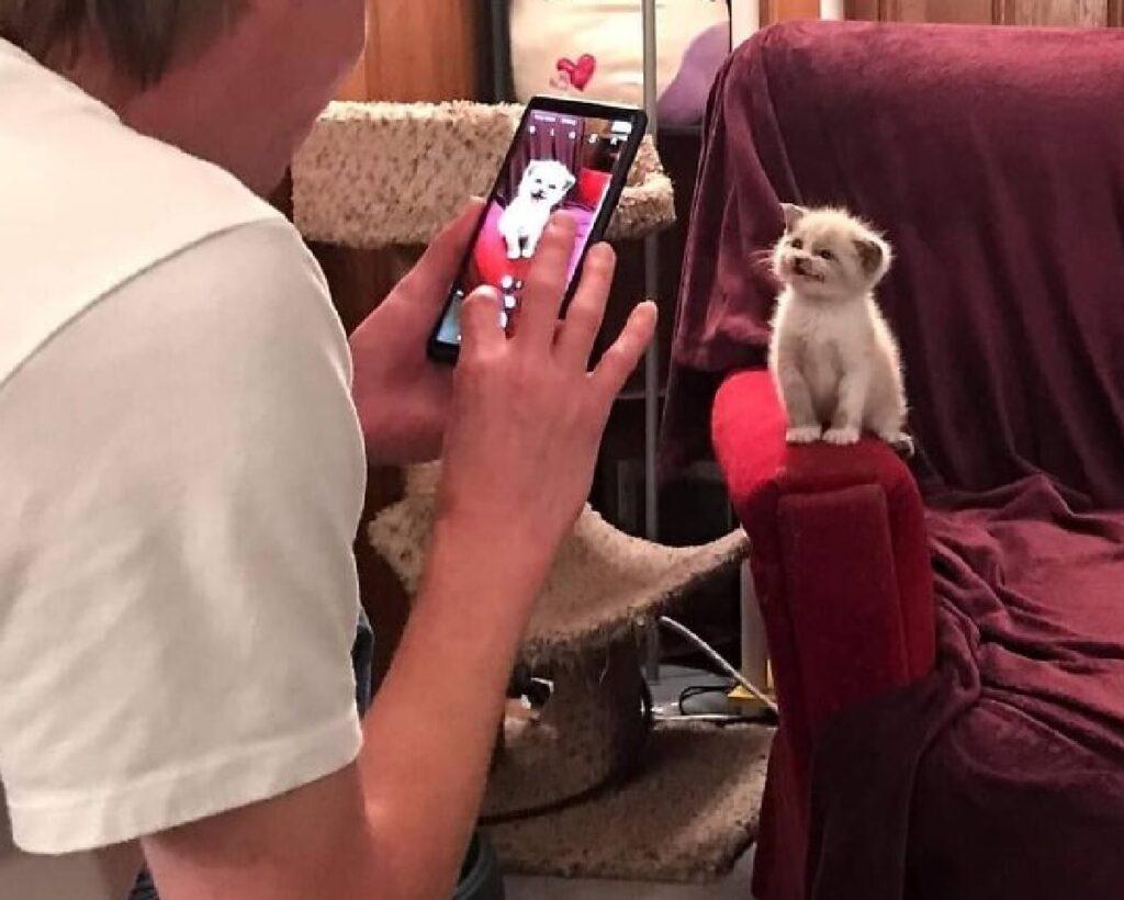 gatto protagonista di fotografia