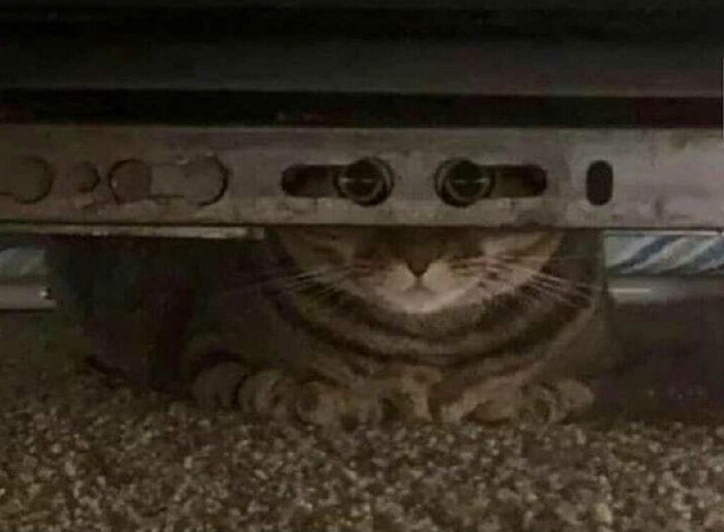 gattino si nasconde dietro pezzo ferro