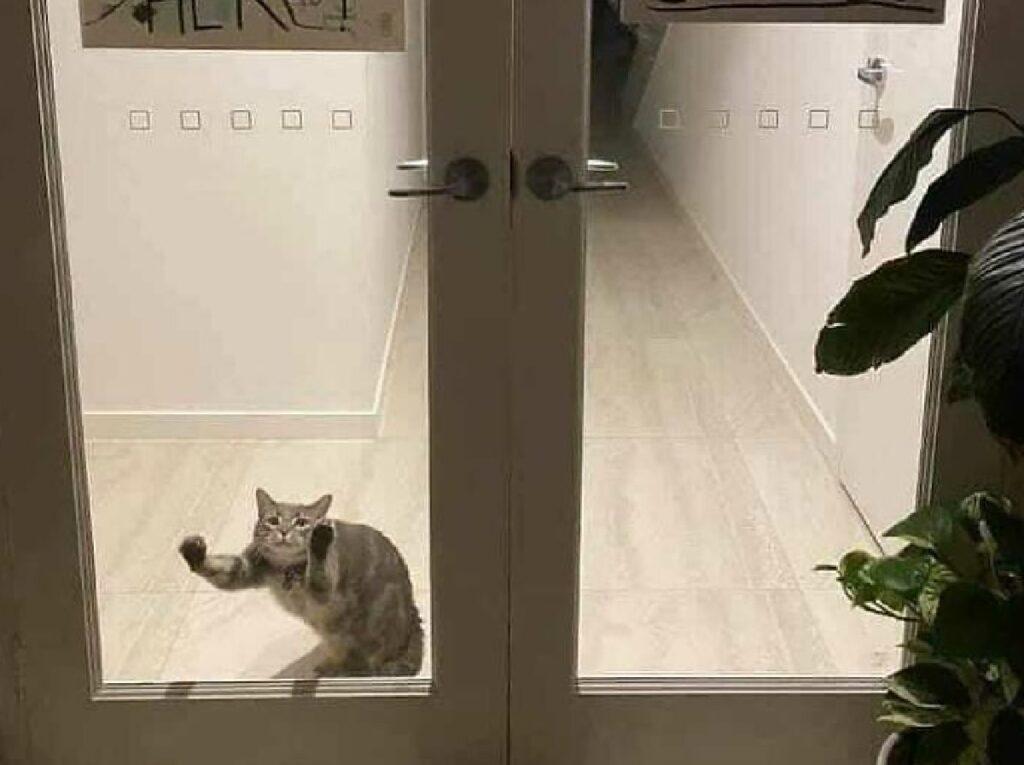 gatto soriano vuole aprire porta