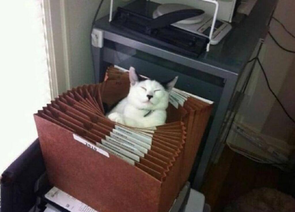 gatto fra cartelle di lavoro