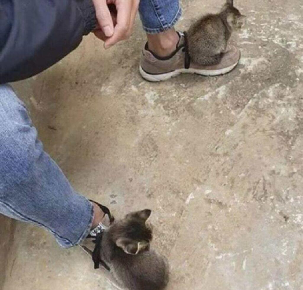 gattini fanno finta di essere scarpe